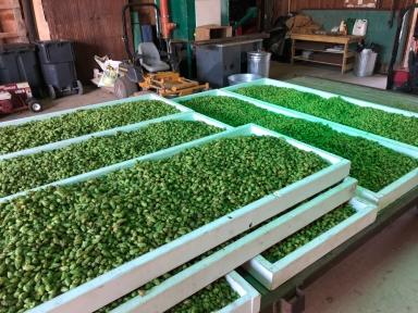 Bænum Hop Farm-95